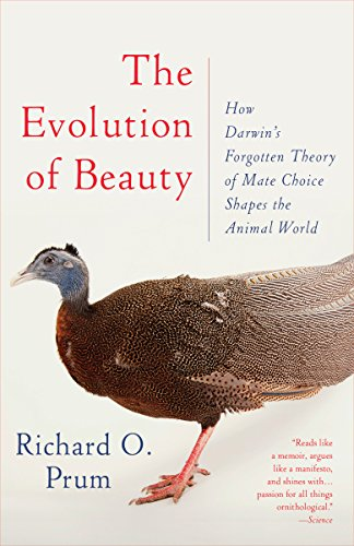 The Evolution of Beauty: How Darwin's Forgotten Theory of Mate Choice Shapes the Animal World - and Us von Anchor