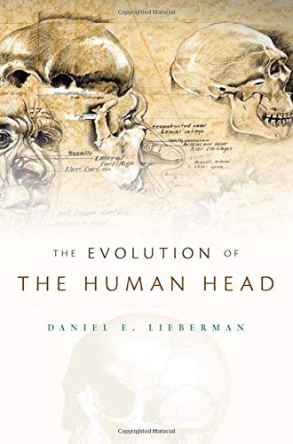 Evolution of the Human Head von Harvard University Press